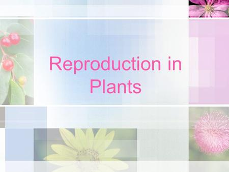 Reproduction in Plants. Sexual Reproduction Sexual Reproduction: Requires sperm cell (pollen) and an egg cell (ovule) to combine to produce a new organism.