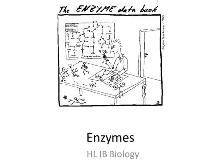 ib hl biology enzymes Flashcards and Study Sets | Quizlet