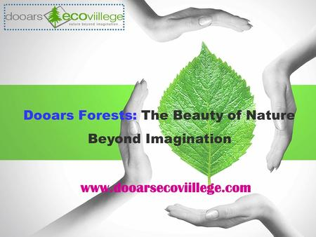Dooars Forests: The Beauty of Nature www.dooarsecoviillege.com Beyond Imagination.