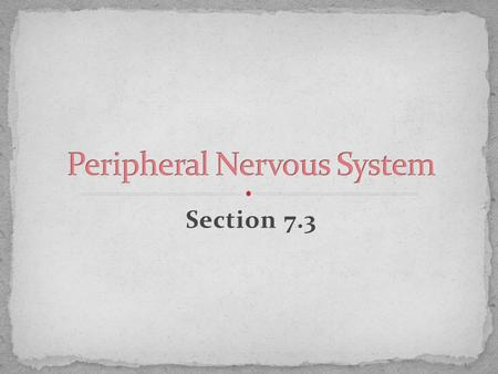 Section 7.3. 1. Lies outside the CNS 2. Composed of the peripheral nerves and ganglia 3. Nerves- bundles of myelinated axons 4. Ganglia- are the swellings.
