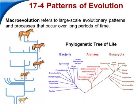 bio 100 patterns of evolution Review of evolution quiz that tests what you know perfect prep for review of evolution quizzes and tests you might have in school.