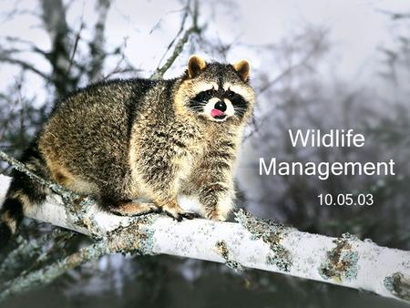 10.05.03 Wildlife Management. Benefits to Humans Hunting/Fishing Viewing Photography Environmental Indicator.