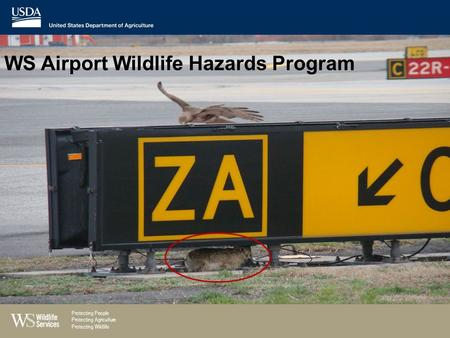 WS Airport Wildlife Hazards Program Protecting People Protecting Agriculture Protecting Wildlife.