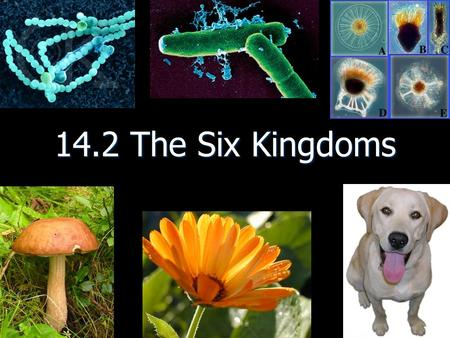 14.2 The Six Kingdoms. Three main characteristics that distinguish the members of each kingdom a. Cellular type (complex or simple) b. Their ability to.