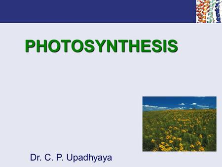 PHOTOSYNTHESIS Dr. C. P. Upadhyaya. Outline How is solar energy captured and transformed into metabolically useful chemical energy? What are the general.