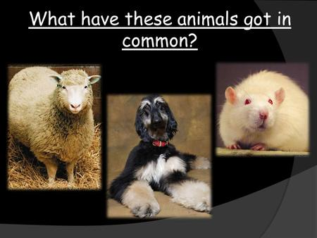 What have these animals got in common?. To further our knowledge of reproduction 22 June 2016 Title - Reproduction Class work.
