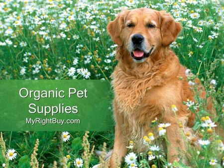 Organic Pet Supplies MyRightBuy.com. Benefits of Organic Pet Supplies Organic products are eco-friendly as well and production of these foods is totally.