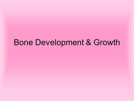 Bone Development & Growth. Bone Development Bones form by replacing connective tissue in the fetus Some form with sheet-like layers of connective tissue.