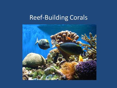 Reef-Building Corals. Coral reefs are produced by millions of coral, _____________, each removing calcium and carbonate from sea water and depositing.