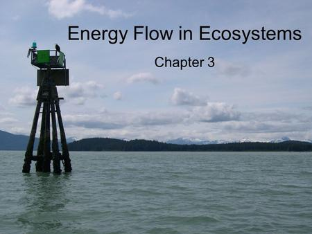 Energy Flow in Ecosystems Chapter 3. Life Depends on the Sun Plants, algae, and some bacteria –Photosynthesis –Convert solar energy from sun into food.