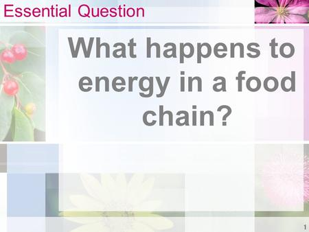 Essential Question What happens to energy in a food chain? 1.