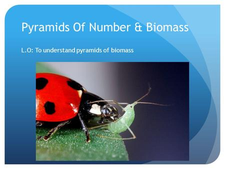 Pyramids Of Number & Biomass L.O: To understand pyramids of biomass.