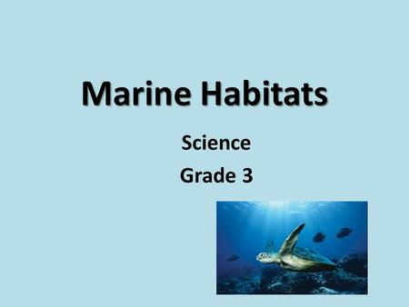 Marine Habitats Science Grade 3. LO: to dexcribe the marine habitats and its animals LO: to dexcribe the marine habitats and its animals.