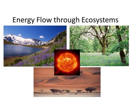 Energy Flow through Ecosystems. Qn What does the arrow show us?