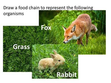 Draw a food chain to represent the following organisms Grass Rabbit Fox.