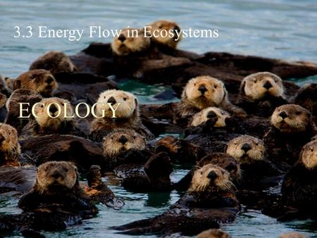 3.3 Energy Flow in Ecosystems. POINT > Identify ways we conceptualize energy flow through ecosystems POINT > Describe food chains POINT > Describe food.