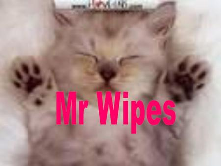 Once upon a time there was a cat called Mr Wipes.Mr Wipes lived in a gutter until he…. Met a lady Found a kingdom He lived in there forever.
