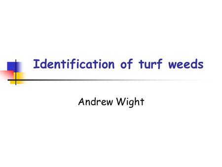 Identification of turf weeds Andrew Wight. What is a weed? A weed is a plant that is in the wrong place. It turf grass weeds are a problem because a.