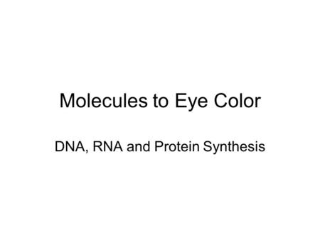 Molecules to Eye Color DNA, RNA and Protein Synthesis.