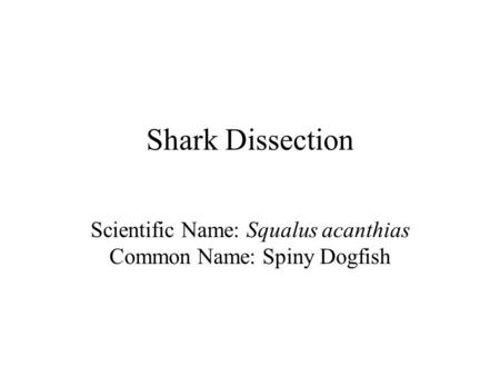 Scientific Name: Squalus acanthias Common Name: Spiny Dogfish