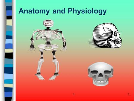 11 Anatomy and Physiology. 12 Lesson Objectives After this lesson students will be able to: Explain the relationship and function of : Cells Tissues Primary.