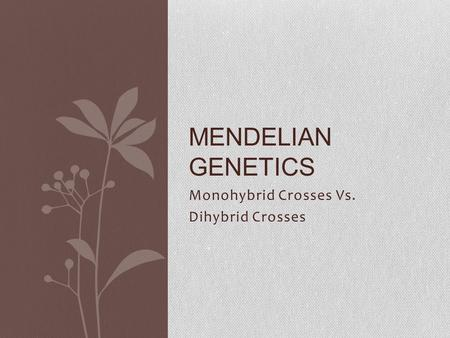Monohybrid Crosses Vs. Dihybrid Crosses MENDELIAN GENETICS.