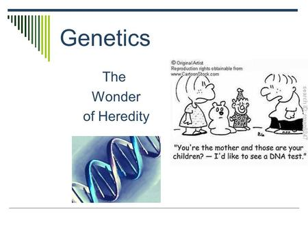 Genetics The Wonder of Heredity. What is Genetics?  Genetics is the study of heredity  Heredity is the passing of traits from parents to offspring 
