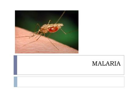 MALARIA. Over view  Basic understanding of malaria  Epidemiology  Symptoms  Diagnosis  Treatment  Prevention.