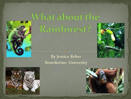 By Jessica Reber Benedictine University. This is a webquest designed to help students study and learn about the tropical rainforest. Students will be.