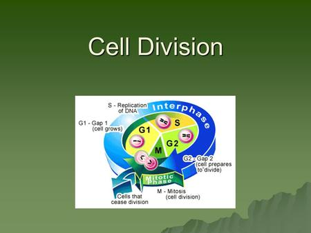 Cell Division. Chromosomes  Are made of DNA  Each chromosome consists of sister chromatids attached at a centromere.