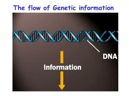 The flow of Genetic information. DNA Replication  DNA is a double-helical molecule  Watson and Crick Predicted Semi-conservative Replication of DNA.