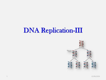 DNA Replication-III 28/04/2017.