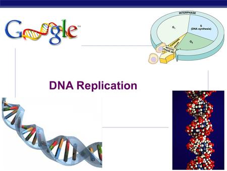 dna replication research paper Research new review paper on initiation of dna replication from structure to mechanism — understanding initiation of dna replication.