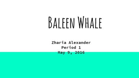 Baleen Whale Zharia Alexander Period 1 May 9, 2016.