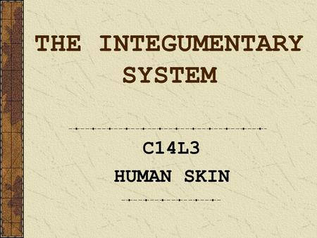 THE INTEGUMENTARY SYSTEM C14L3 HUMAN SKIN. Integumentary System skin hair nails.