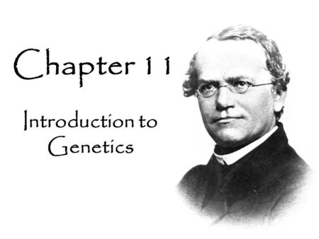 Introduction to Genetics Chapter 11. 11- 1 The Work of Gregor Mendel Every living thing – plant or animal, microbe or human being – has a set of characteristics.