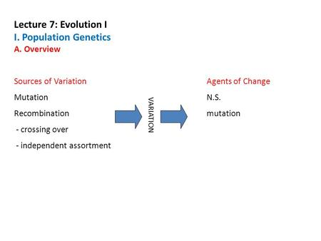 Lecture 7: Evolution I I. Population Genetics A. Overview Sources of VariationAgents of Change MutationN.S. Recombinationmutation - crossing over - independent.