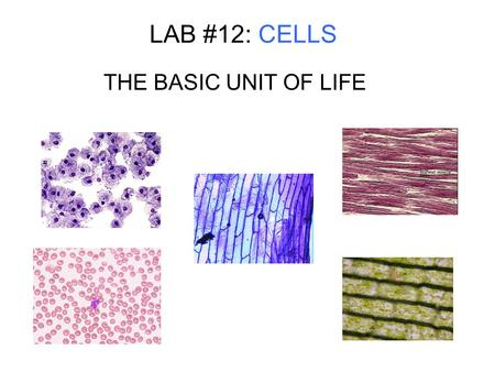 LAB #12: CELLS THE BASIC UNIT OF LIFE. PURPOSE 1. OBSERVE LIVING & NON-LIVING CELLS UNDER THE MICROSCOPE 2. STUDY & LOCATE, USING THE MICROSCOPE, 5 CELL.