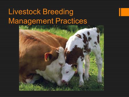 Livestock Breeding Management Practices. Reproduction  Sexual reproduction involves both male of female animals.  Fertilisation = when a sperm from.