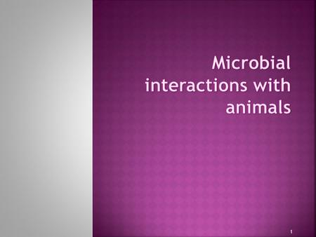 1.  Predation on microorganisms by animals  Cultivation of microorganisms by animals for food and food processing  Commensal and Mutualistic intestinal.