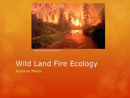Wild Land Fire Ecology Kaylene Maize www.leadership.wharton.upenn.edu.