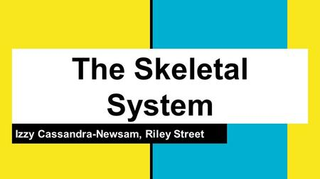 The Skeletal System Izzy Cassandra-Newsam, Riley Street.