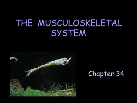 Chapter 34 THE MUSCULOSKELETAL SYSTEM. A. Types of Skeletons 1. Hydrostatic skeleton Consists of liquid within a layer of flexible tissue. Functions to.