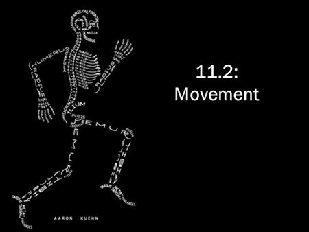 11.2: Movement. Bones & exoskeletons Bones and exoskeletons provide anchorage for muscles and act as levers. Exoskeletons = external Levers = change size.