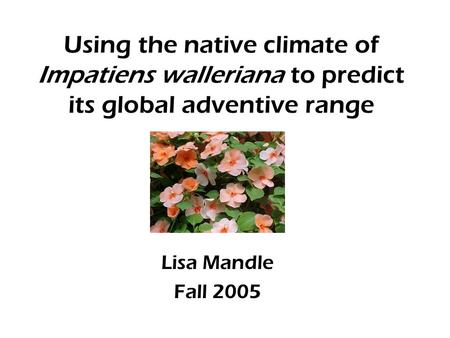 Using the native climate of Impatiens walleriana to predict its global adventive range Lisa Mandle Fall 2005.