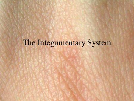 The Integumentary System. Composed of the skin, sweat and oil glands, hair, and nails. Accounts for 7% of the body's weight. Major role is protection.