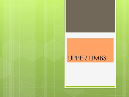 UPPER LIMBS.  Upper Limb (p231) 30 bones form each upper limb A. Bones of the upper limb form the framework for the arm, forearm, and hand.