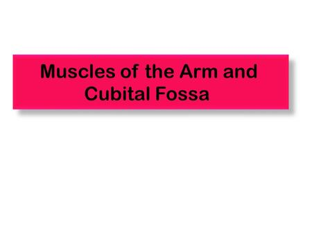 Muscles of the Arm and Cubital Fossa. The Arm Shoulder Elbow A R M Bone of the Arm Humerus Anterior view Posterior view.
