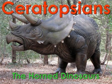 Look at the picture of the ceratopsians above. What do they have in common? The most obvious similar characteristics they share is their heads and beaks.
