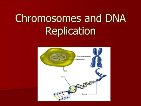 Chromosomes and DNA Replication. Prokaryotes and Eukaryotes Prokaryotes: Prokaryotes: –lack nuclei –lack many organelles –DNA located in cytoplasm –single.